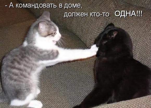 http://fotomau.ru/albums/userpics/10002/034.jpg
